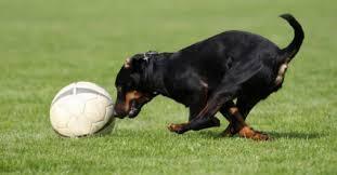 Tipps, was hundebesitzer wissen und beachten sollten. Chiropraxis Hund Munchen Herrieden Pferdepraxis Chiropraxis Dr S Gschwender Geb Lenk Pferdepraxis Chiropraktik Herrieden