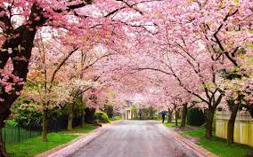 Image result for flowering trees#source%3Dgooglier%2Ecom#https%3A%2F%2Fgooglier%2Ecom%2Fpage%2F%2F10000