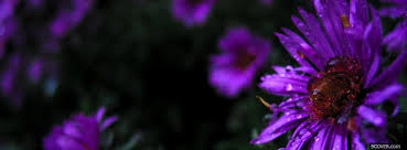photo nature purple flower facebook cover for free
