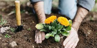 how to start a home garden askmen
