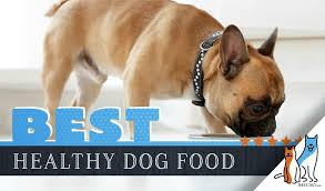 15 Best Dog Foods Our 2019 Extremely In Depth Guide To