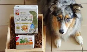 Dog And The Honest Kitchen