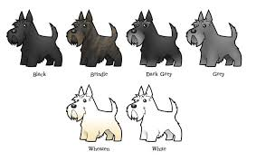 West Highland Terrier Growth Chart This Is A Fantastic Chart That Shows All The Different