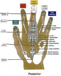 Korean Acupressure Chart Korean Hand Reflexology Chart Posterior Charte De