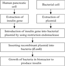 Insulin Preparations Chart Recombination Dna Technology Is Of Great Importance In The