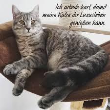 Katzenweisheiten Instagram Posts Gramhanet