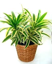 common house plants common house plant plants common house plants pictures common household plant names common
