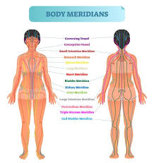 Body Meridian System Vector Illustration Scheme Chinese