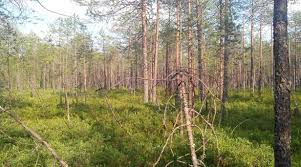 Отчёт по учебной практике По шкалам Друде и Браун Бланкэ мы определили обилие видов растений на каждом типе леса