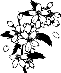 白黒の桜の花と枝の無料イラスト春41800 素材good