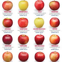 Types Of Apples Chart Which Apple To Use Discover The 16 Varieties Of Michigan