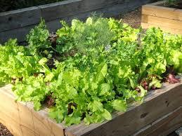 Small Picture backyard 34 Small Raised Vegetable Garden Design Garden Ideas