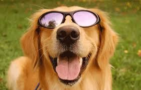 Resultado de imagem para Cuidados com os pets durante o verão