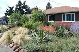 drought resistant garden. Drought-Tolerant Garden, Yucca And Boulders Drought Resistant Garden N
