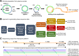 Illumina Sequencing Flow Chart Illumina And Nanopore Methods For Whole Genome Sequencing Of