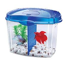 betta fish tanks.  Tanks Aqueon Betta Fish Tank Starter Kit Half Gallon Blue For Tanks I