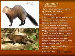 Презентация на тему Доклад Животные Красной книги Челябинской  3 Описание