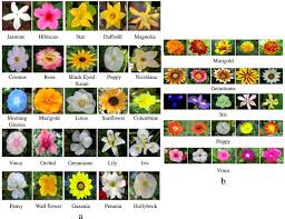 a sle flower images of 25 flower cles considered in this work b sle images of five diffe cles with large intra cl variations