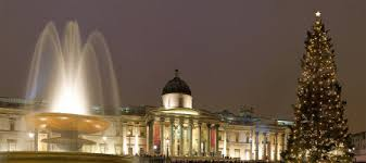 Trafalgar Square Christmas Tree: Flower Experts gives you tips and ...