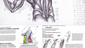 Muscle Anatomy Coloring Pages Ultimate For Adults And Worksheets ...
