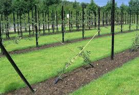 Nature Trees Shape Fruit Shapes Fruit Tree Tree IconFruit Tree Shapes
