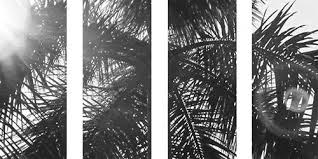 Modern Palm Trees Tumblr Black And White Blackandwhitephotos For Concept Ideas