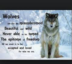 Wiccan Quotes Interesting Image Result For Wolf Quotes The Truth Recovery On Wiccan Quotes