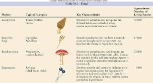 Fungi Phylum Chart Bing Images Fungi Microbiology Biology