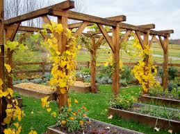 Wooden Grape Vine Trellis