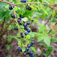 52 Best Fruit Gardening Images On Pinterest  Fruit Trees Non Gmo Fruit Trees For Sale