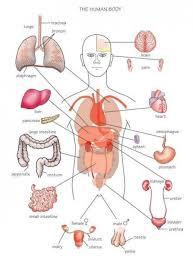 Pinterest Medical Medical Terminology Human Anatomy Best 24 Medical Terminology Ideas 18