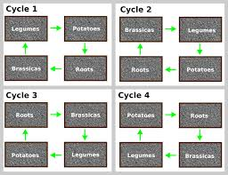 A Beginners Guide To Crop Rotation How It Works And Why