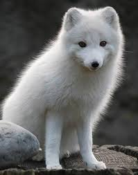 aw what a cute baby wolf