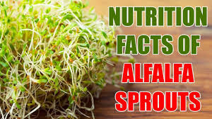 nutrition facts of alfalfa sprouts alfalfa sprouts nutritional value benefits of alfalfa sprouts