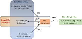 Sex Hormone Binding Globulin An Overview Sciencedirect