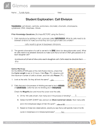 On the table tab, click record data. Student Exploration Cell Division Bio Miscbl3 Ga 3 Student Exploration Worksheet Cell Division Gizmo Activity