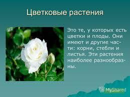 Презентация на тему Окружающий мир класс Тема Разнообразие  12 Цветковые