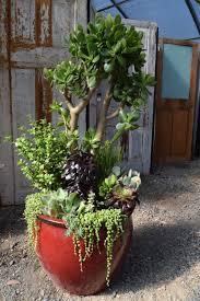 plants for office cubicle. House Plants Garden Center Bozeman, Mt For Office Cubicle