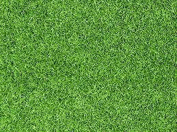 Download The Kiwicare Lawn Care Guide