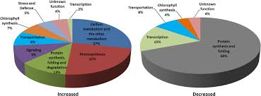 Pie Chart Representation Of The Functional Groups Of