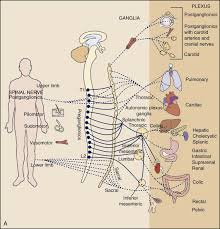 Pain Types And Viscerogenic Pain Patterns Musculoskeletal Key