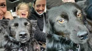 Nerino, il cagnolino dal passato difficile, è stato adottato da Ciro Priello
