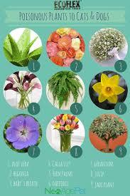 100 best pnw plants toxic to dogs ideas