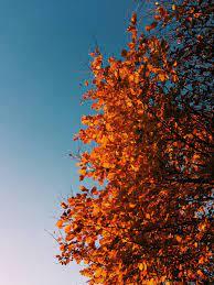 Autumn photography ...