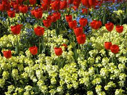 bedding plant definition and synonyms