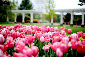 tower hill botanic garden is a nonprofit organization established in 1986 in boylston massachusetts by the worcester county horticultural society