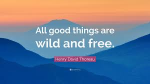 "Thoreau Quotes Stunning Henry David Thoreau Quote ""All Good Things Are Wild And Free"" 48"