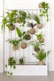 Il filodendro è un genere di 275 specie di piante sempreverdi che appartiene alla famiglia delle aracee, originario dall'america meridionale, viene coltivato spesso come pianta da. Pin Su Piante