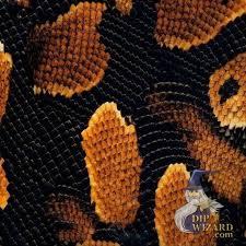 Snake Skin Pattern Magnificent Gold Boa Snake Skin S48 Film Pattern DipDemon