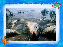 Презентация на тему Доклад Что делается для охраны морей рек и  5 А теперь вот мы видим моря без рыб и без воды